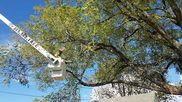 tree-service-murray-utah