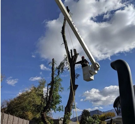 tree service cottonwood-heights