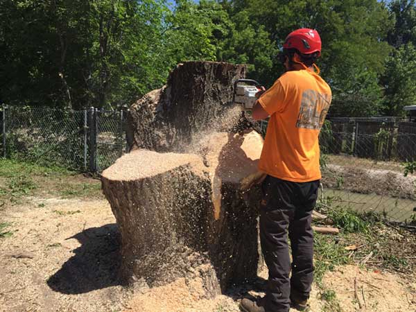tree stump removal vs grinding