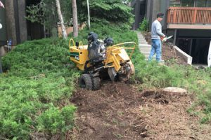 stump grinding service in action