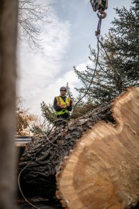 utah-tree-removal-job