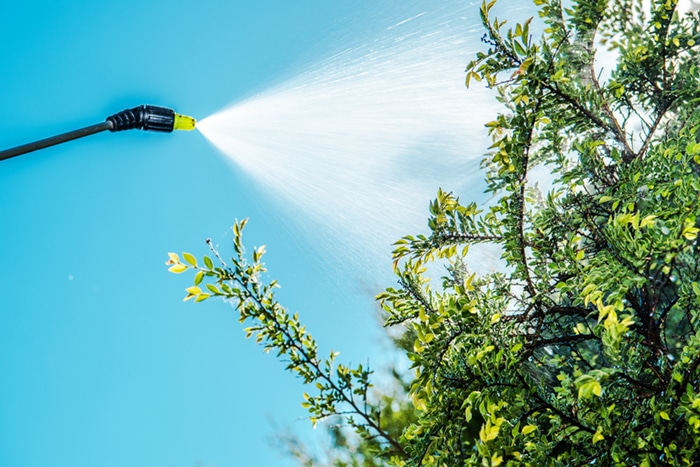 salt lake city tree spraying