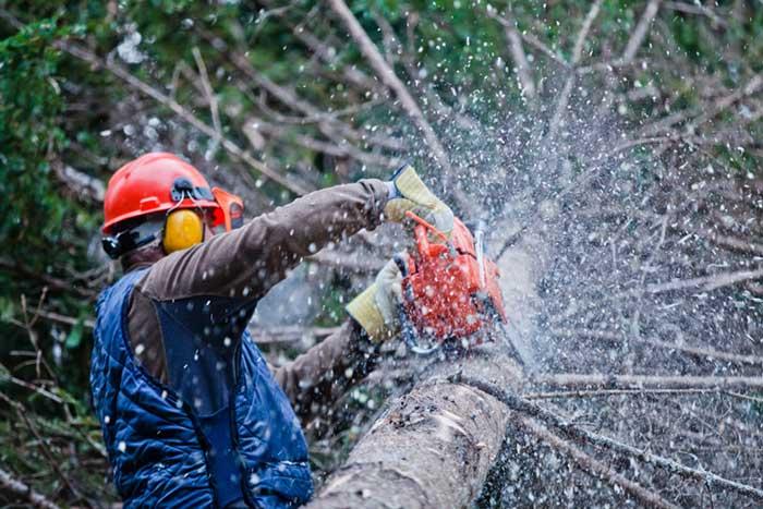 tree service riverton utah