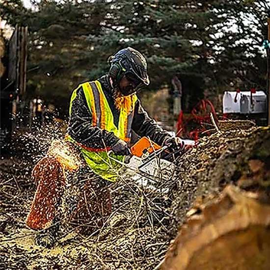 tree service sandy utah