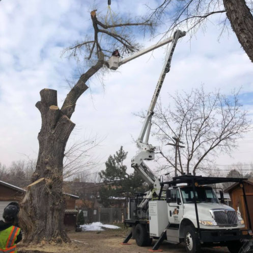 tree services west valley city