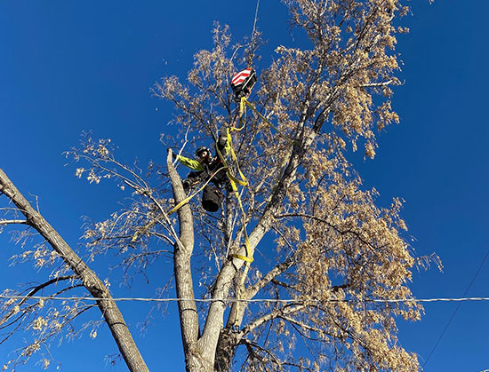 midvale tree service