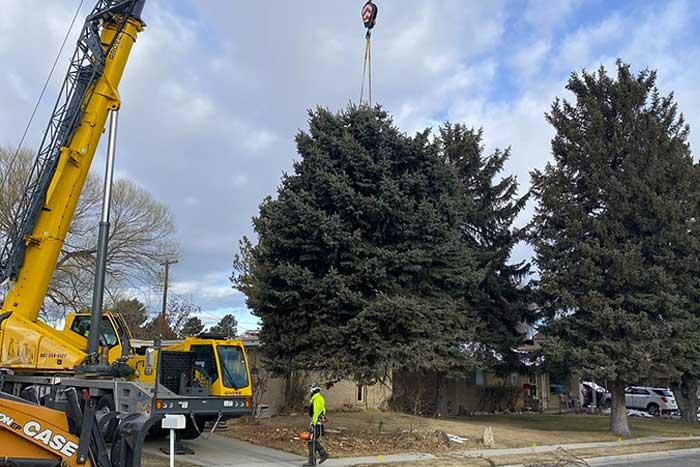 taylorsville tree service
