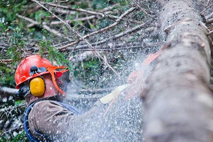 kearns tree service