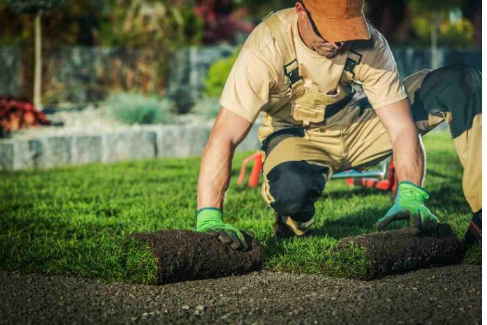 how to plant grass after tree removal