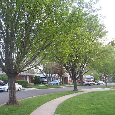 utah trees